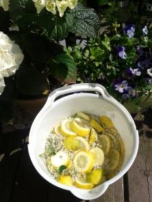 Elderflower bucket