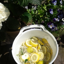 Elderflower bucket