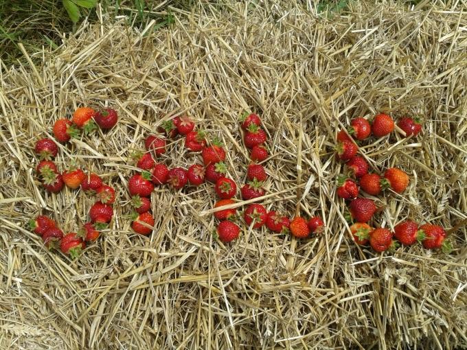 Strawberry fields forever!