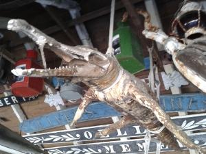 Petrified Crocodile