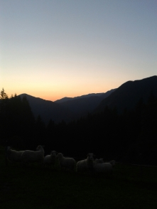 """Counting Sheep."" Heather Gartside"