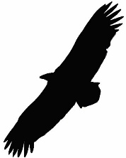 buzzard-silhouette