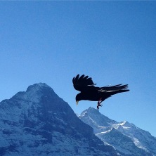 BIG BIRD ON THE EIGER. Photograph by Heather Gartside 2017
